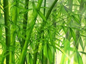 Bambou parle de la MIOP et de WebKiosk